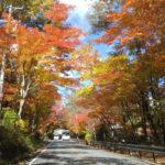 浅間山麓の紅葉は今が見頃! 各種キャンペーンを使ってお得に楽しもう!